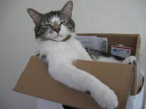 Valaistuminen ja kissankakka